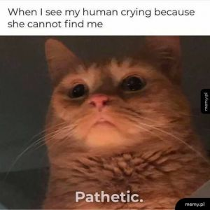 When I see my human..