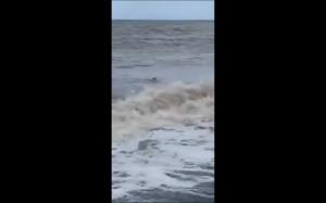 Zając wyskakujący z oceanu