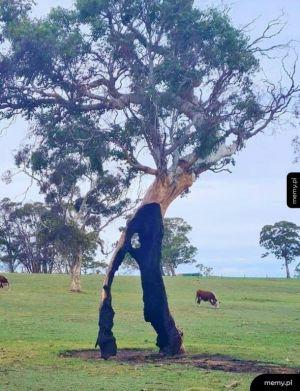 Ciekawe drzewo