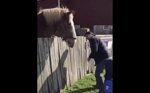 Koń porywający dziecko