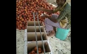 Najprostszy sposób sortowania owoców