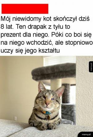Biedny kot