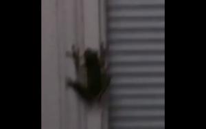 Kiedy żaba połknie świetlika
