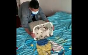 Pudełko kotów