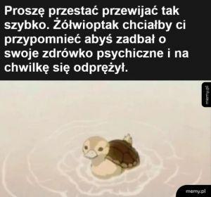 Kaczuszko żółwik