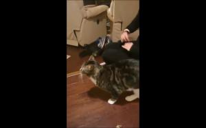 Koteł się przeraził