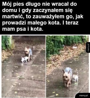 Kolega psa