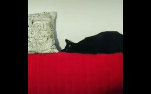 Koteł oszalał