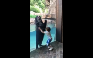 Niedźwiedź naśladuje dziecko