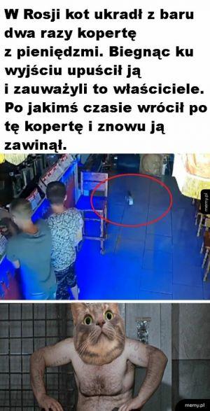 Kotek złodziej