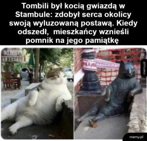 Kotek Tombili z Turcji