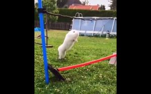 Go bunny!
