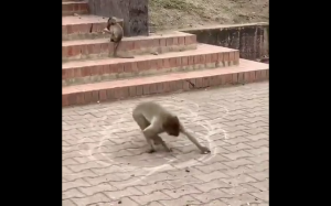 Małpa rysuje okręgi
