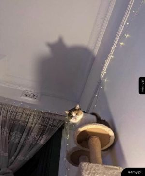 Bat kot