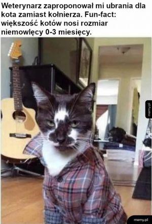 Ubrania dla kota