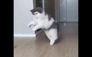 Koteł piłkarz