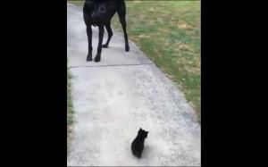 Jak to możliwe, że jesteś taki mały?