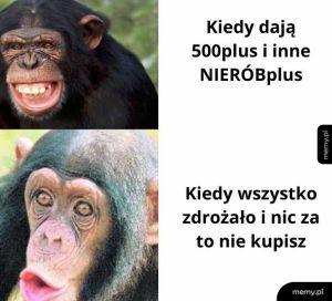 Małpy razem socjalne