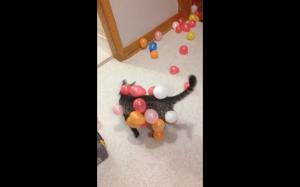 Koteł sprząta po imprezie