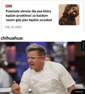 Obroża dla psa
