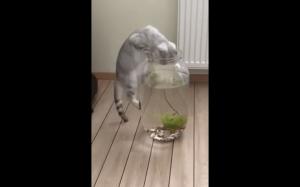 O rybki!