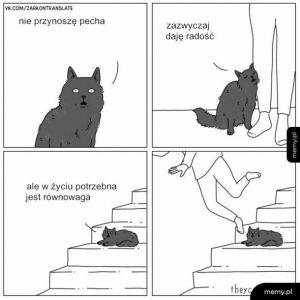 Złota rada kota
