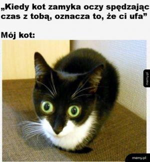 Nieufny kot