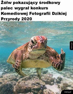 Super zdjęcie