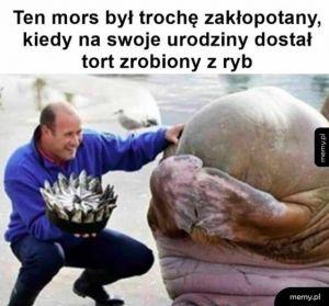 Urodziny morsa