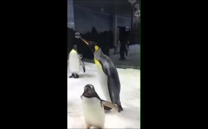 Bańki i pingwiny