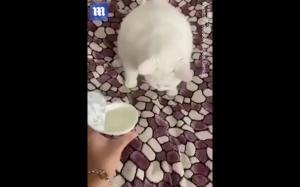 Chyba nie lubi jogurtu