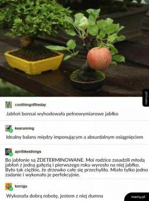 Prawilna jabłonka