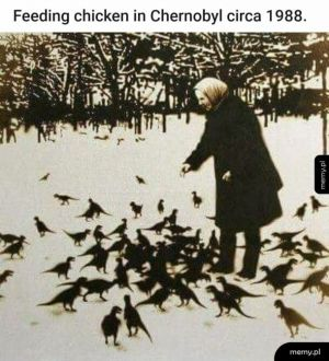 Hodowla kurczaków