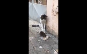 Nie przeszkadzaj mi!