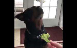 Może sałaty?
