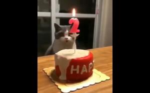 Jak prawidłowo zgasić świeczki urodzinowe