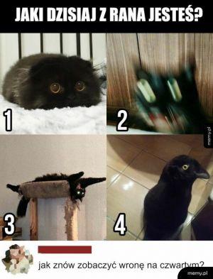 Twój nastrój w skali kota