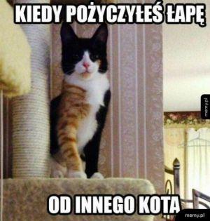 Kocyborg