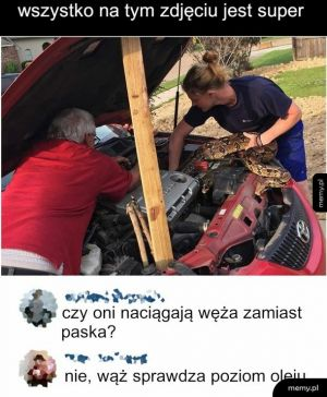 Wonsz mechanika