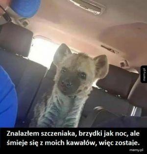 Szczeniaczek :-)