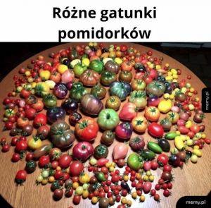 Pomidorki