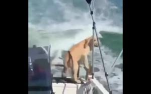 Pieseł, gdy zobaczył delfina