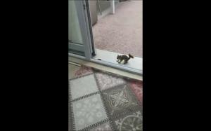 Zabawa z wiewiórką