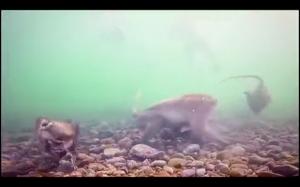 Małpy pod wodą
