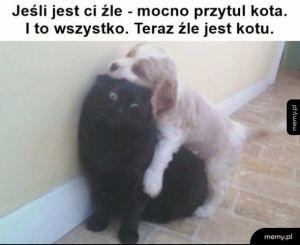 Przytul kota