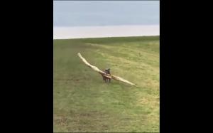 Pieseł znalazł patyk