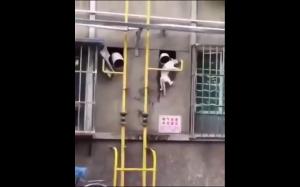 Grawitacja dla kotów nie istnieje