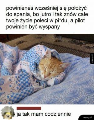 Chcę być kotem