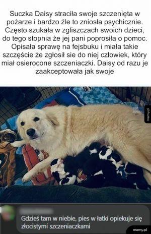 Adopcja szczeniaków