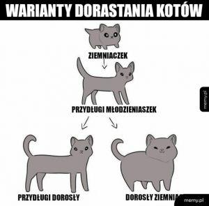 Moje koty tak mają